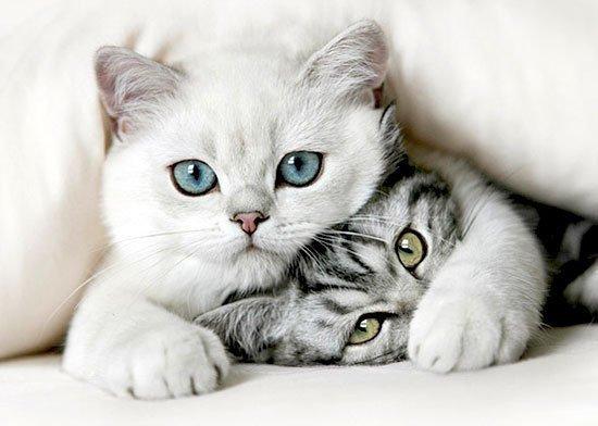 Chats les plus beaux au monde
