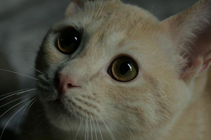 Classement des chats les plus beaux