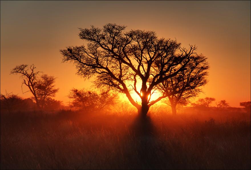 Coucher de Soleil sur le Kalahari