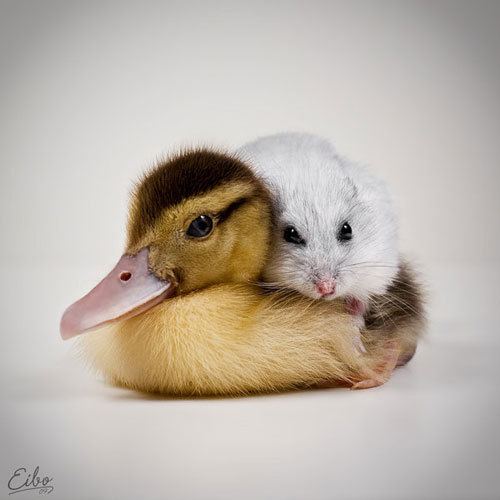 Les animaux les plus mignons au monde