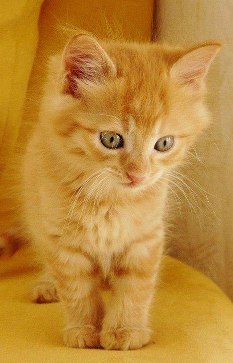 Les chats les plus beaux