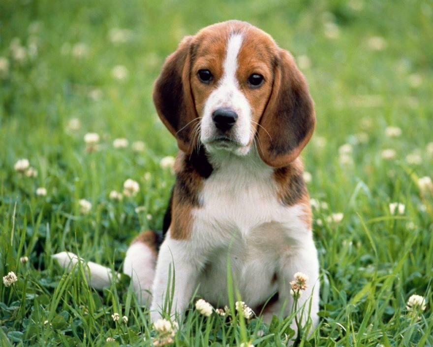 Les chiens les plus beaux