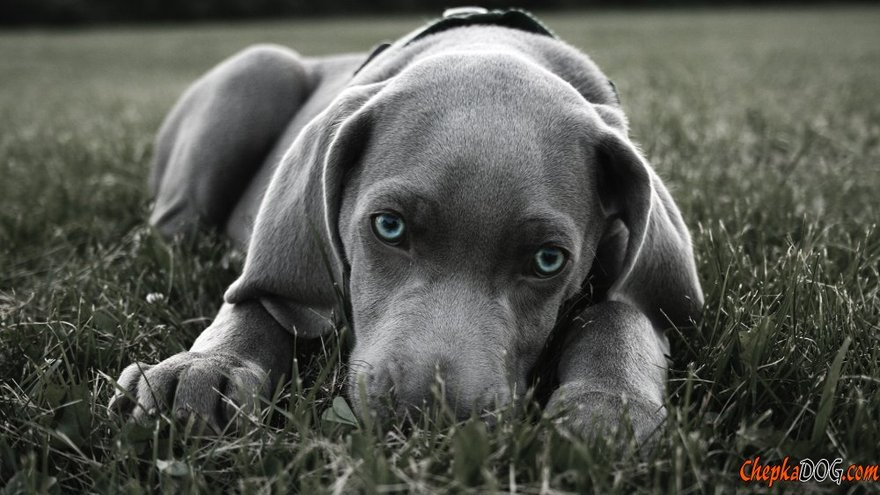 Les chiens les plus mignons au monde