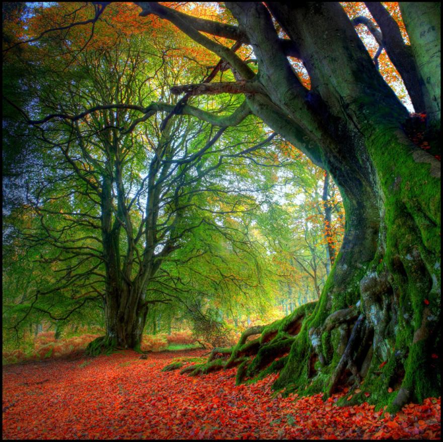 Les couleurs de l'automne en Ecosse