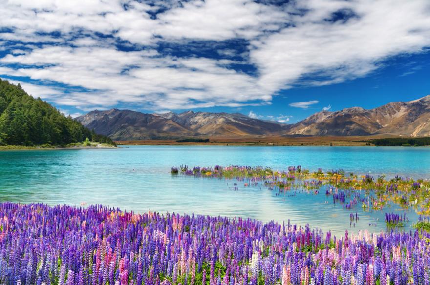 Le Lake Tekapo en Nouvelle Zélande