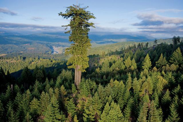 Orêt californienne Prairie Creek Redwoods State Park