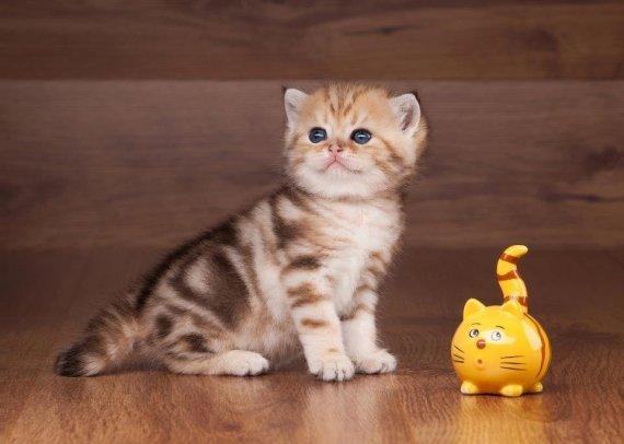 Top des chats les plus beaux