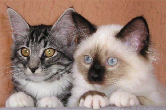 Top des chats les plus beaux au monde