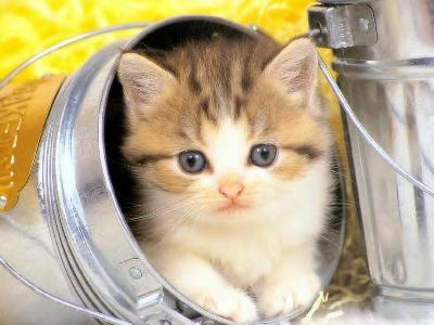 Top des chats les plus mignons