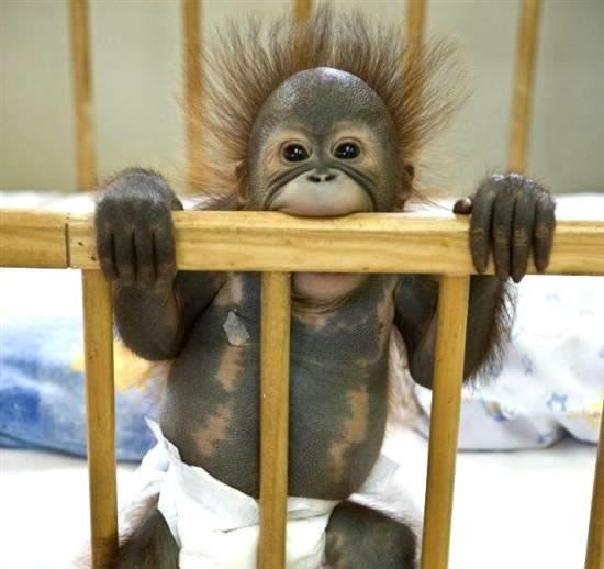 Les animaux les plus drôle du monde