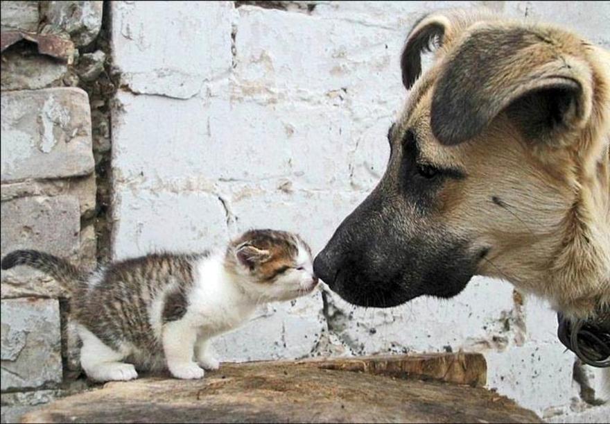 Bisous entre chien et chat