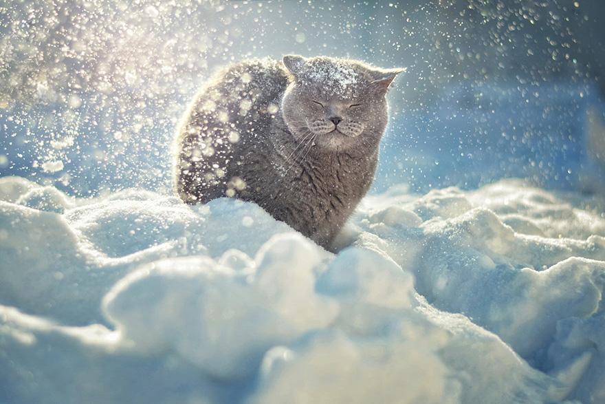 Un chat gris dans la neige