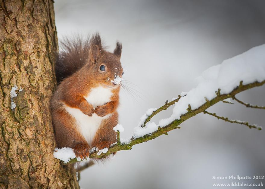 Un écureuil dans la neige