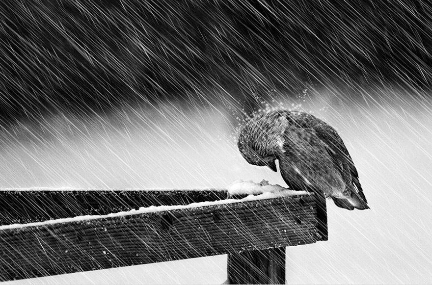 Un oiseau sous la neige