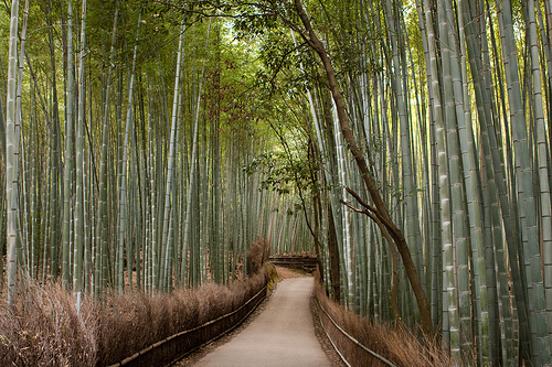 Bamboo groves à Kyoto, Japon