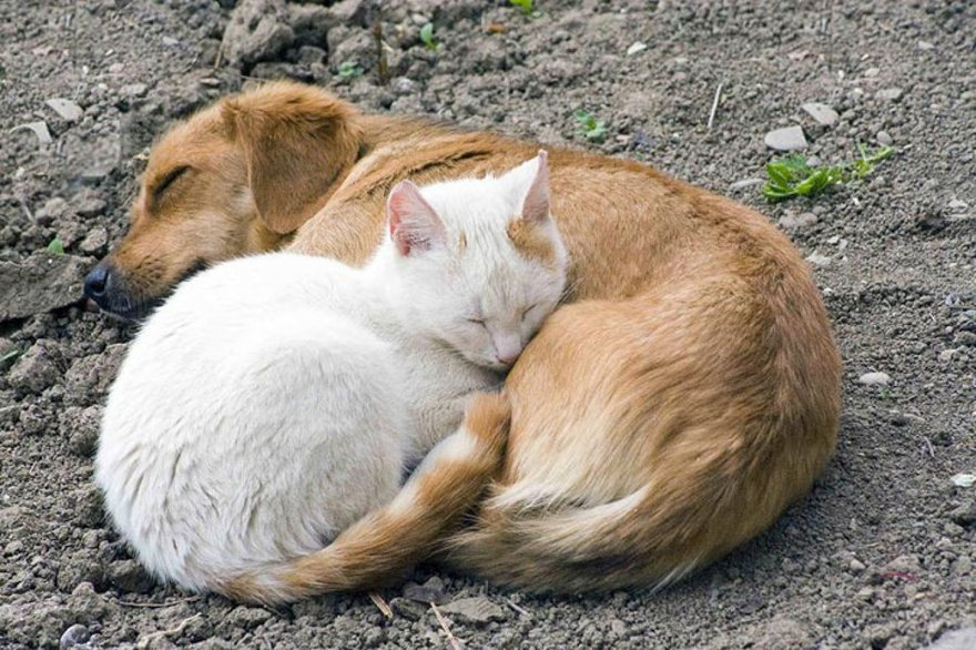 Câlins de chats