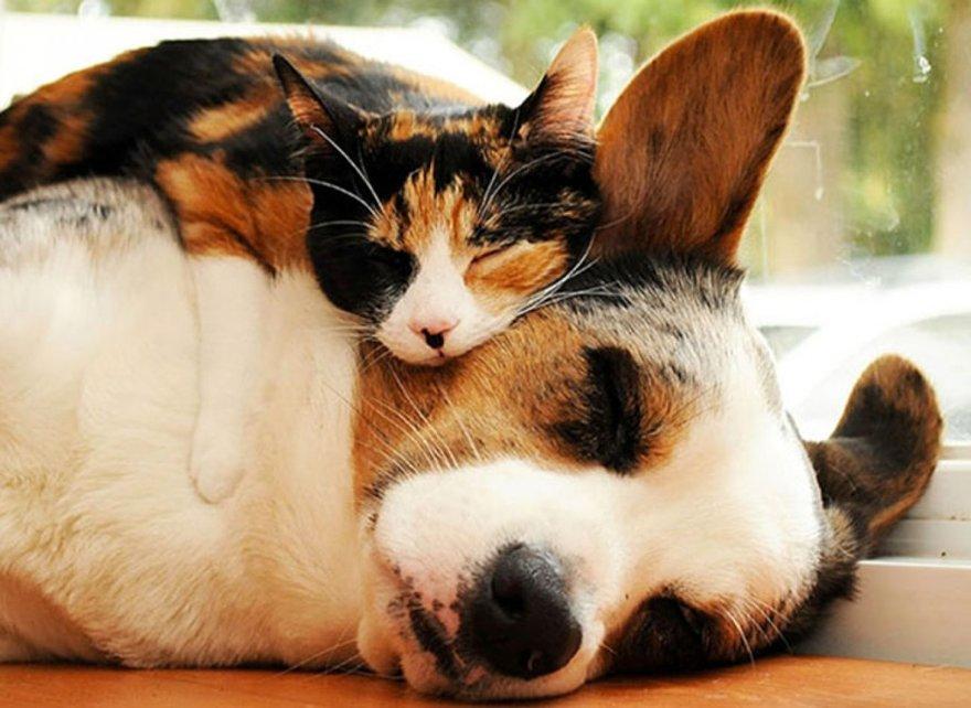 Câlins entre chat et chien