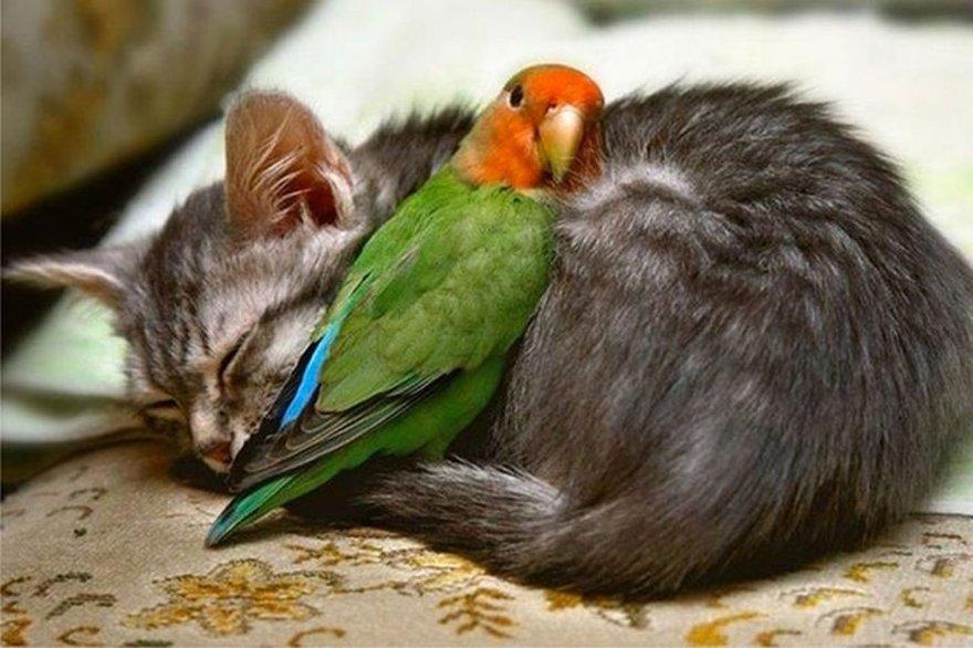 Câlins entre chat et perroquet