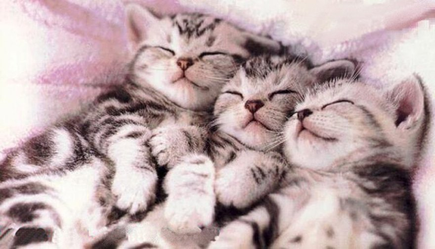 Câlins entre chats