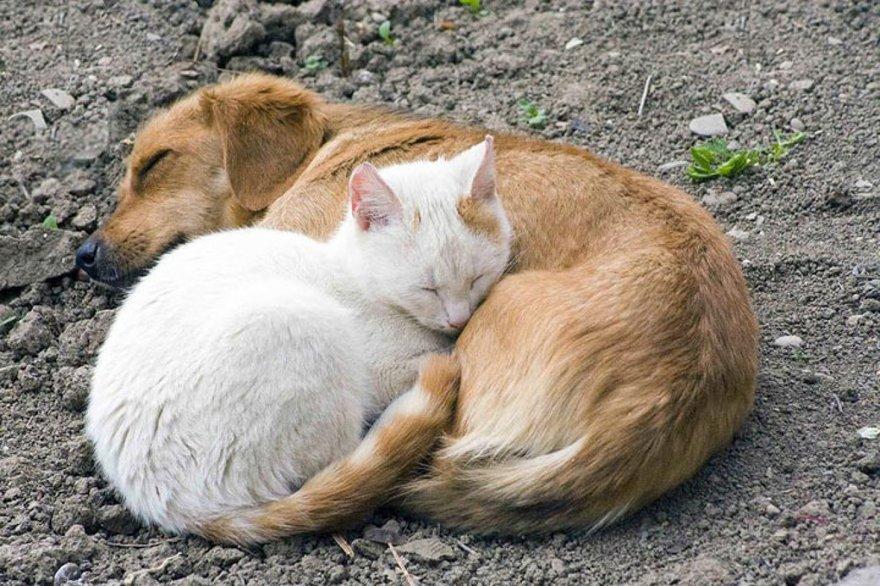 Câlins entre chiens et chats