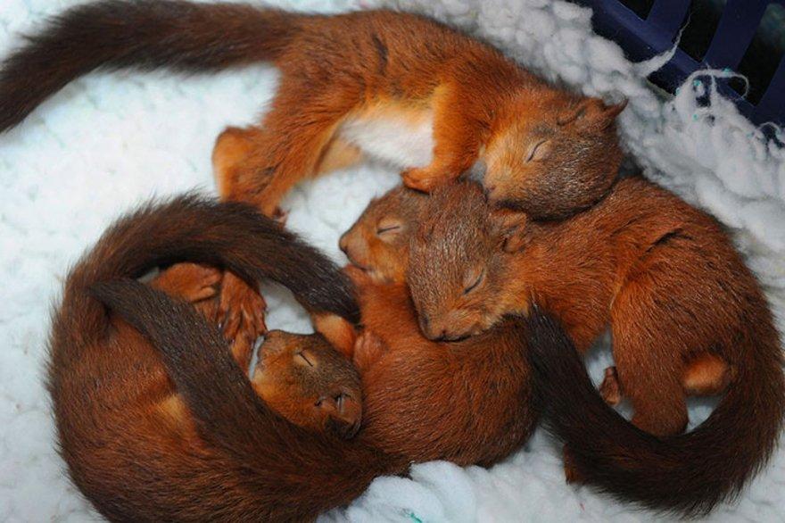 Câlins entre écureuils