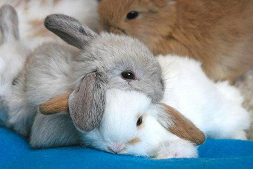 Câlins entre lapins