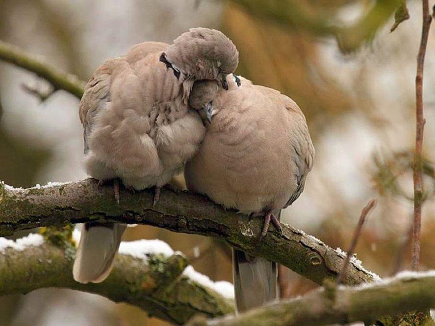 Câlins entre oiseaux