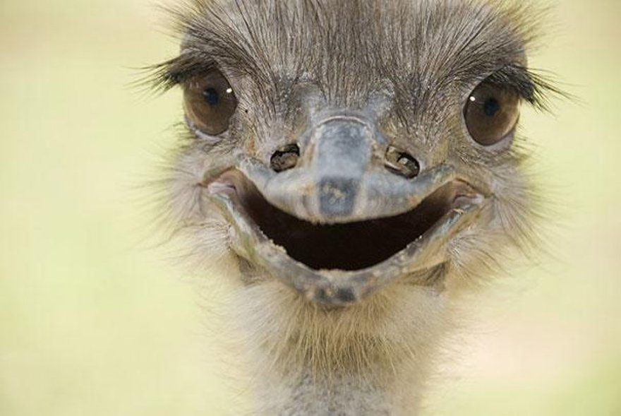 Un sourire d'autruche