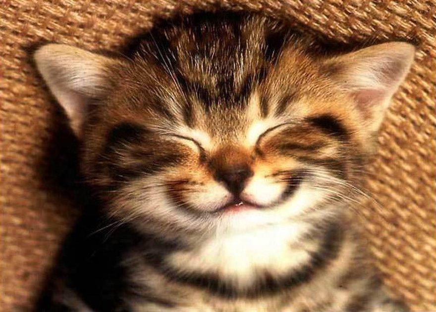 Un sourire de chat