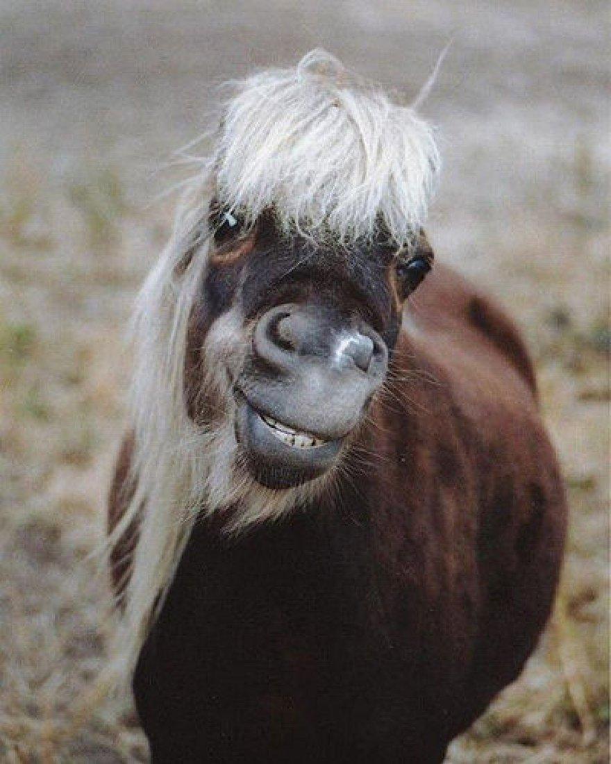 Un sourire de cheval