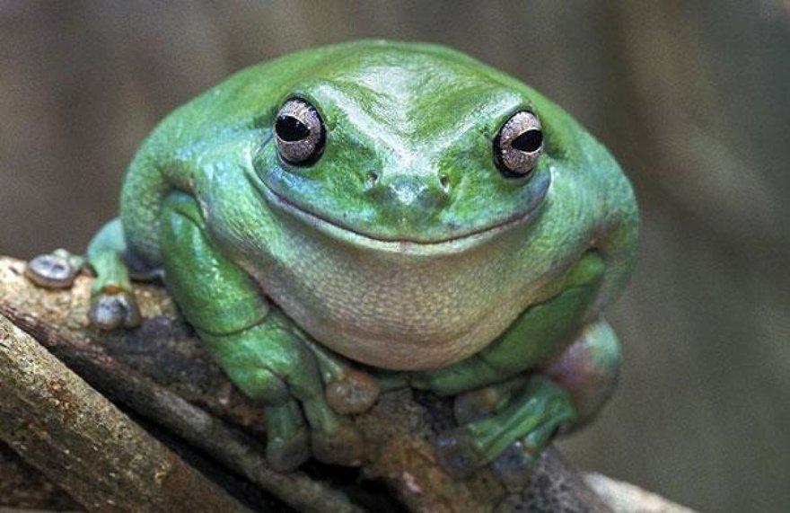 Un sourire de grenouille