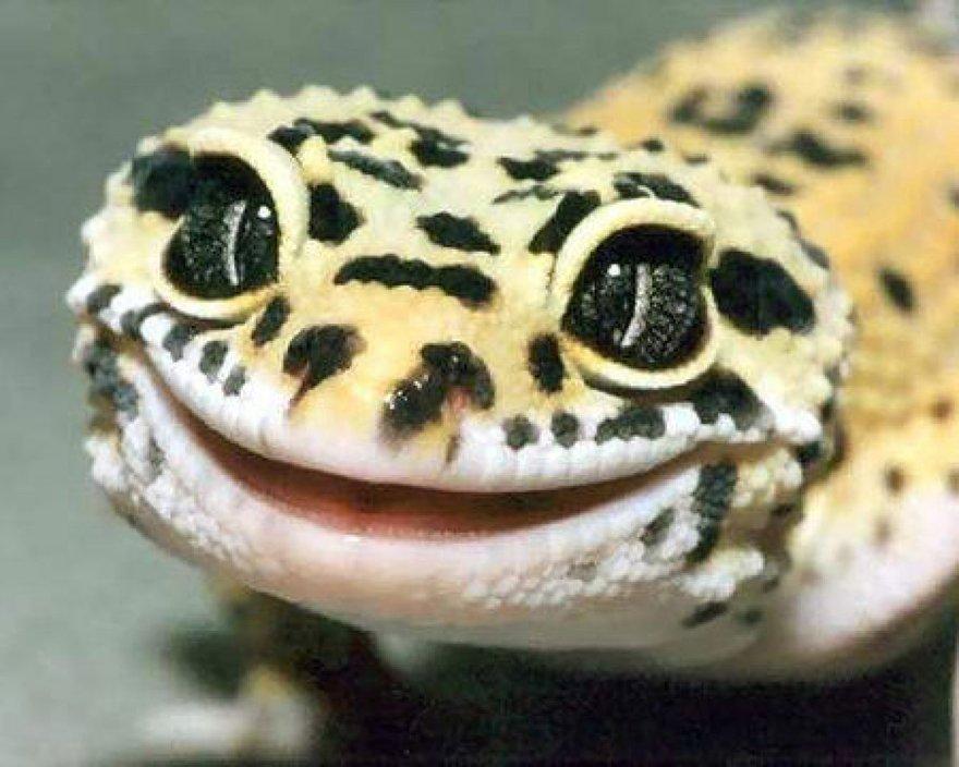 Un sourire de lézard