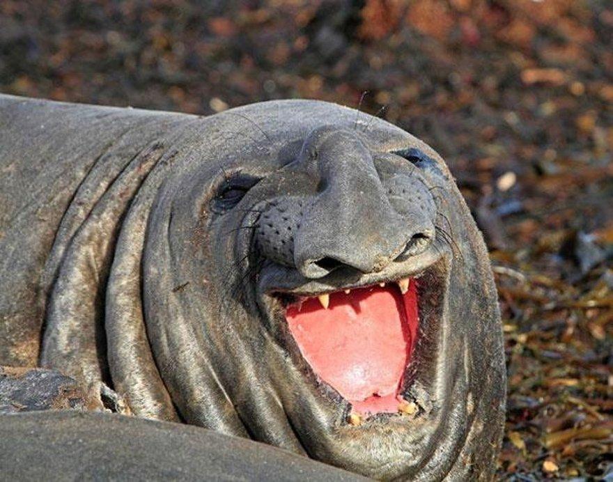 Un sourire de phoque