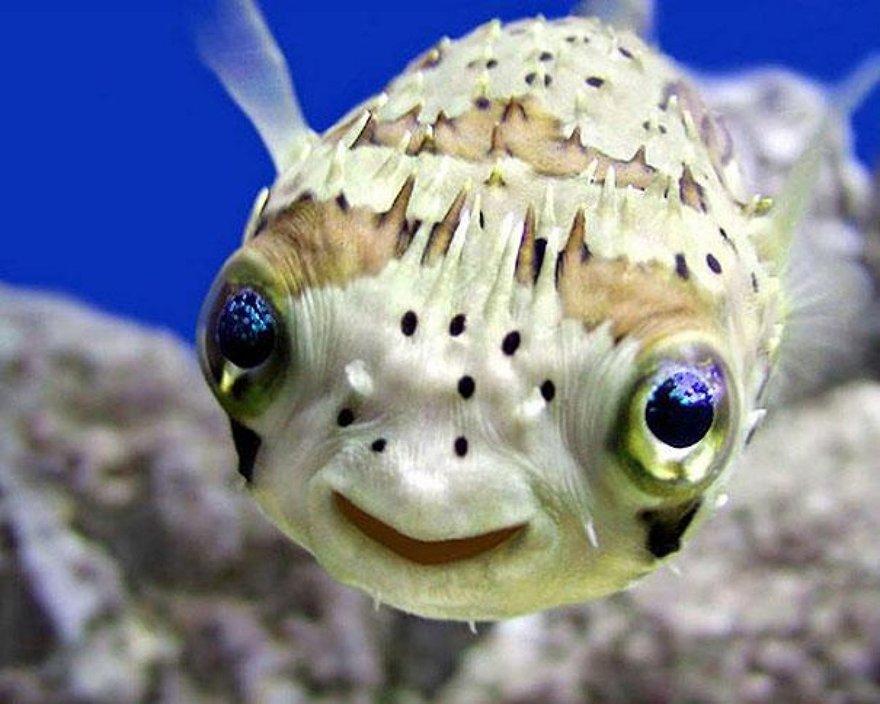 Un sourire de poisson