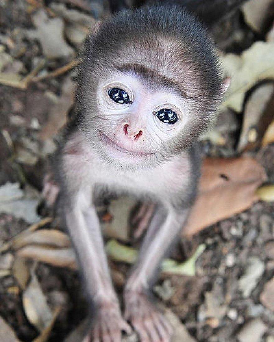 Un sourire de singe