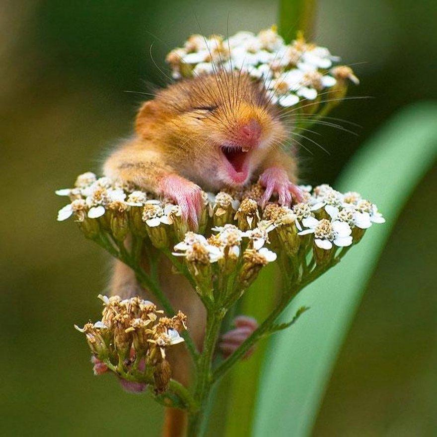 Un sourire de souris
