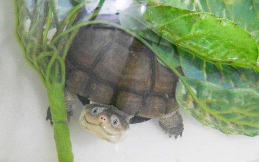 Un sourire de tortue