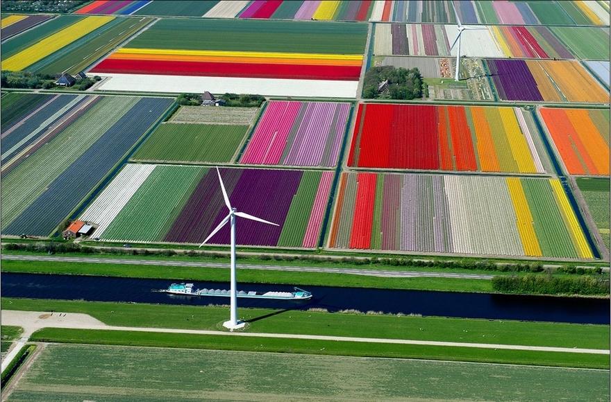 Les champs de tulipes de Spoorbuurt, aux Pays-Bas